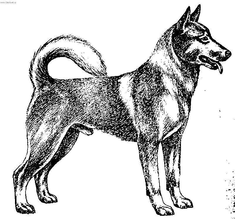 Fotky  Caanský pes (foto cafbb5a47d