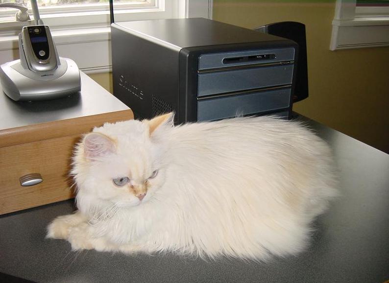 Foto: Kymerská kočka