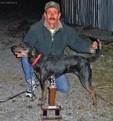 Foto: Treeing Tennessee Brindle-Lolly. Majitel: Frank Burton. Chovatel: Don Bonsett