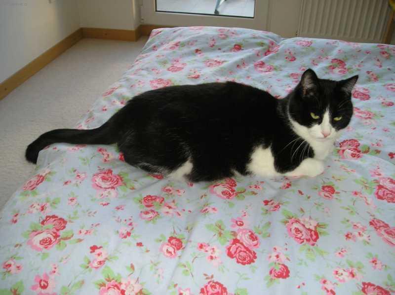 Fotky: Výchova koček (foto, obrázky)
