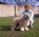 Psí plemena: Ovčáci a honáčtí psi > Pyrenejský ovčák s dlouhou srstí (Berger des Pyrénées á Poil long)
