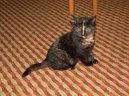 Kočky: Veterinární poradna > Co dělat, když kočka nebo jiné zvíře poraní (Pokousání člověka kočkou)