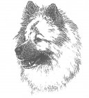 Ps� plemena:  > Eurasier