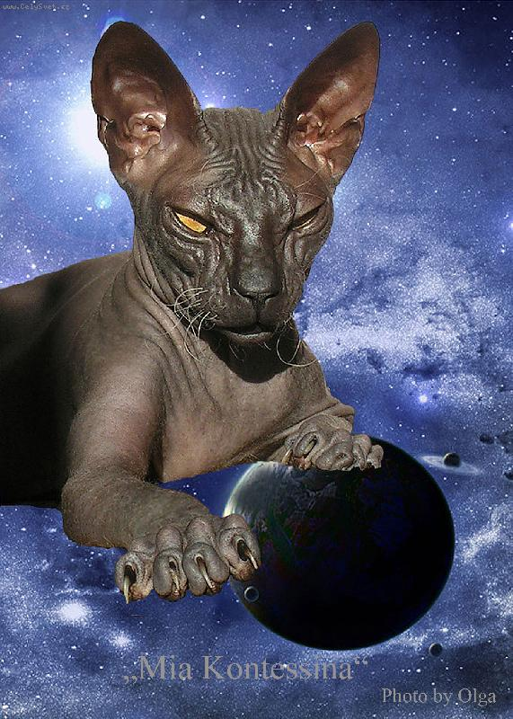 Foto: Aurora Sky Diamond of Kontessina-Don Sphynx