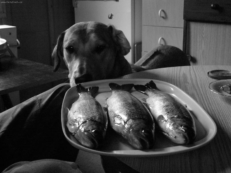"Foto: ""Fish&chips"""