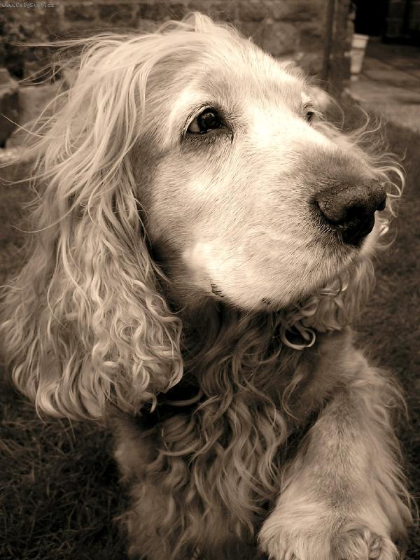 Foto: Pes,přítel člověka-Náš Bendí
