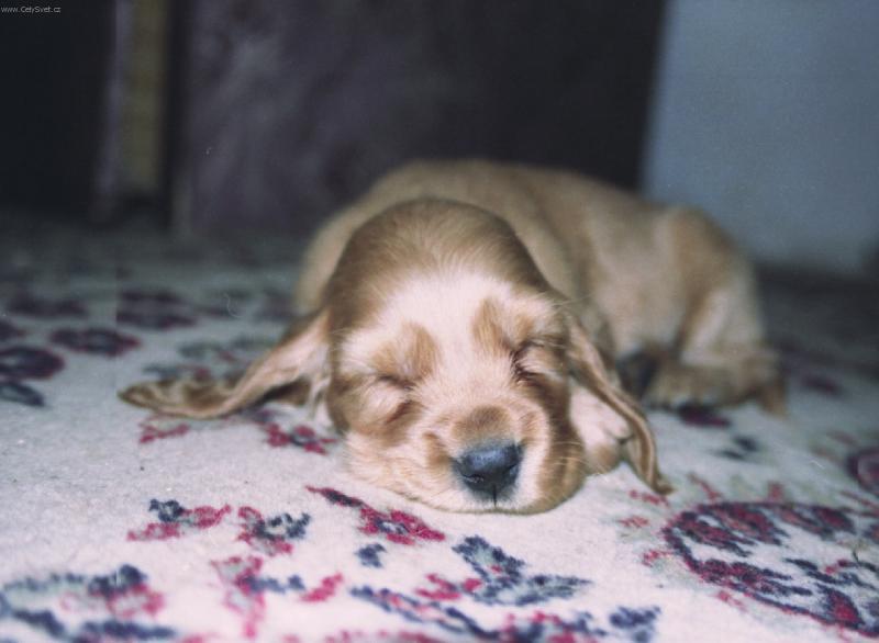 Foto: Kokrik-zaspal na polceste