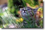 Tapety Na Plochu Kočky