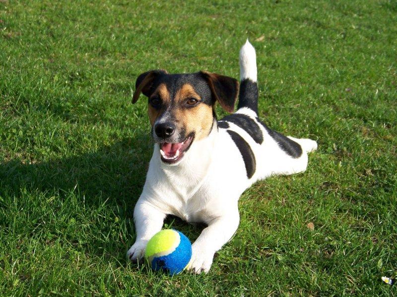 Foto: psík v trávě