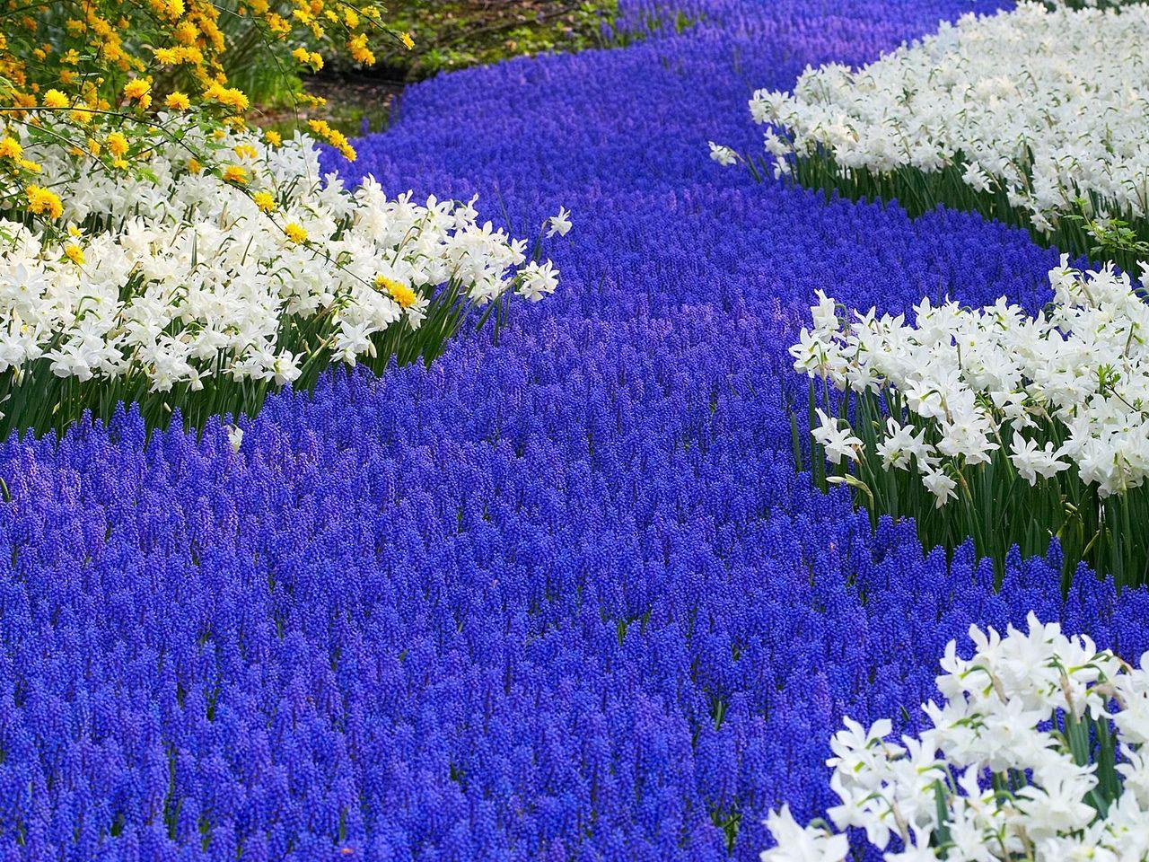 Какие цветы цветут все лето если посадить их весной