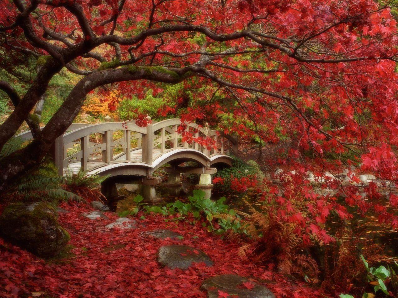 Japonské zahrady, royal silnice university, british columbia