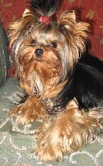 Chovatelska stanice psů: Z DYNASTIE CHAN