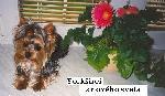 Chovatelska stanice psů: Z NOVÉHO SVĚTA