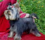 Chovatelska stanice psů: Z ÚDOLÍ LIBERKA