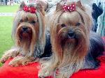 Chovatelska stanice psů: PAVUČINA SNŮ