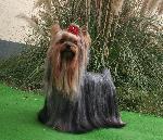 Chovatelska stanice psů: FUN VON ERNEST