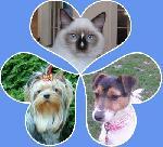 Chovatelska stanice psů: DASCHIA