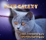 Chovatelska stanice psů: BLUE GALAXY*CZ