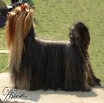 Chovatelska stanice psů: MONITE CIARA