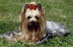 Chovatelska stanice psů: MIO CUORE