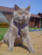 Chovatelska stanice psů: BLUE AZZURIA*SK