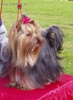 Chovatelska stanice psů: PRAŽSKÝ CYRANO