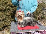 Chovatelska stanice psů: BENYEN