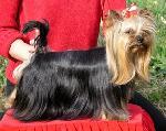 Chovatelska stanice psů: ZE STŘÍBRNÉ OLIVY